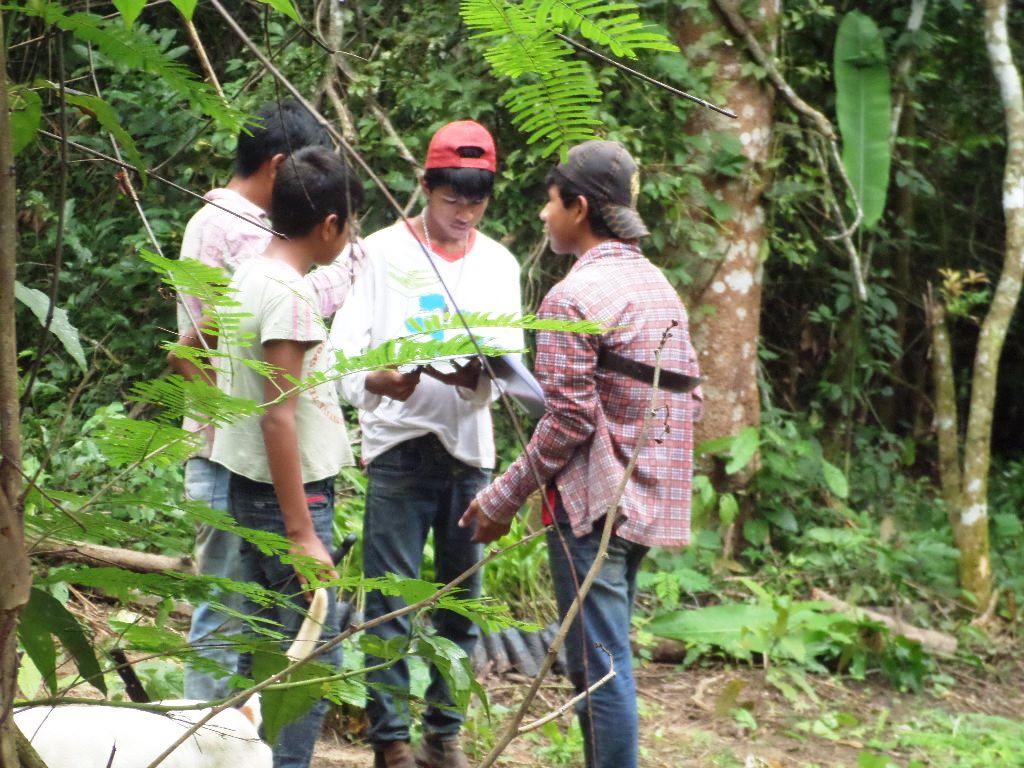 Um grupo de quatro jovens está parado em meio a árvores. Eles lêem um papel.