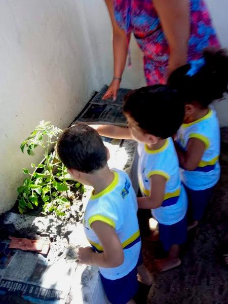 Em jardim de escola, três crianças uniformizadas e em fileira olham para folhas de planta acompanhados por educadora. Fim da descrição.